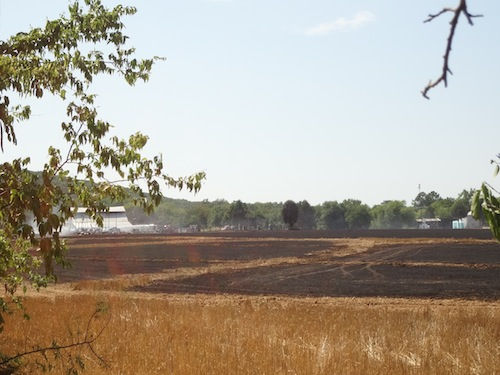 Fire In Field5