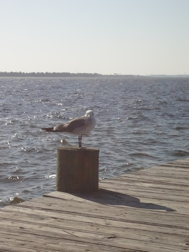 seagull on the harbor