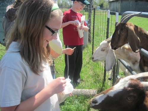 elizabeth and joel feeding goats