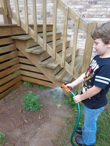 jayden watering tomatoes