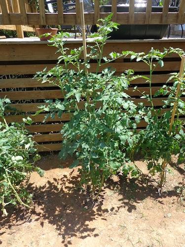 garden update 2013
