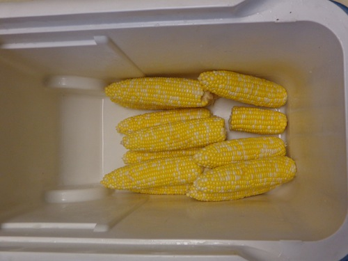 Corn On The Cob In A Cooler