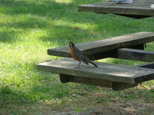 gastons bird