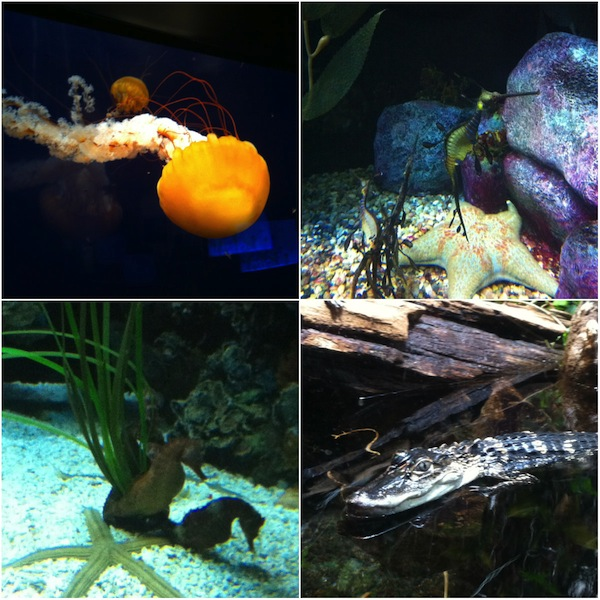 TN Aquarium collage