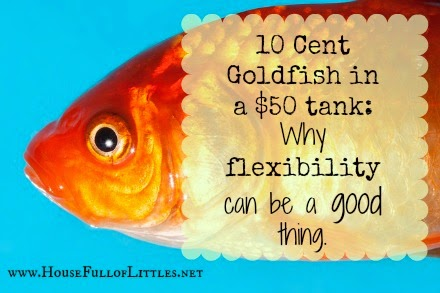 10 Cent Goldfish in a 50 tank