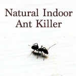 Natural Ant Killer for Indoors