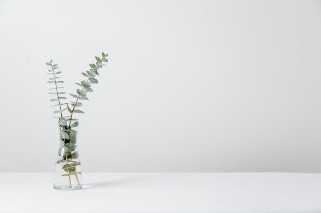 green fern plant in vase