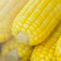 freshly cooked corn on the cob