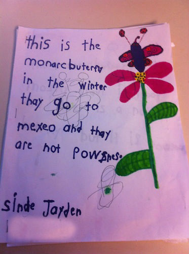 story of the monarch butterfly