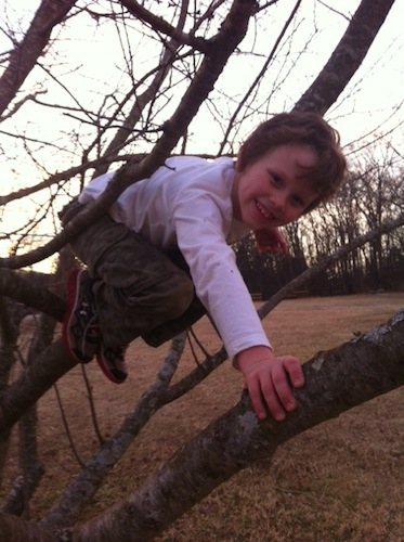 jayden in tree 2