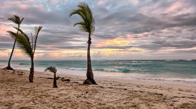 sea beside green palm trees