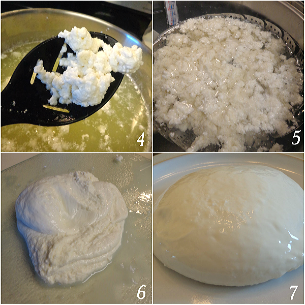 steps to make mozzarella cheese