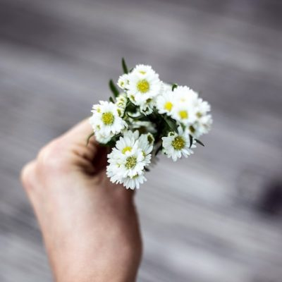 hand holding white aster flowers